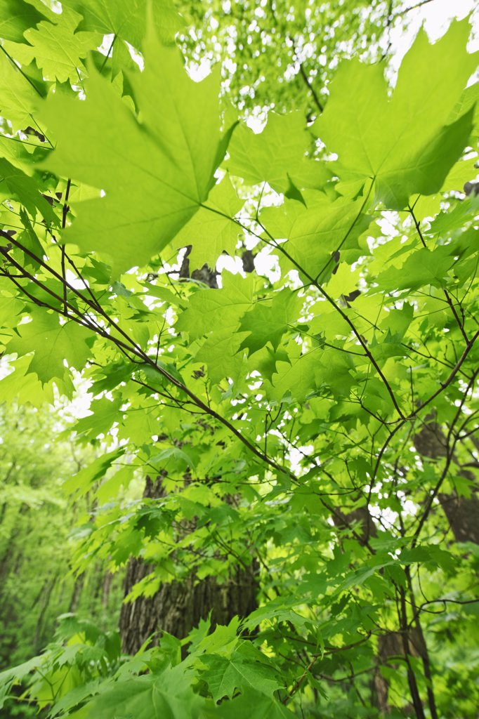 Stock Photo: 1795R-21096 A forest of trees