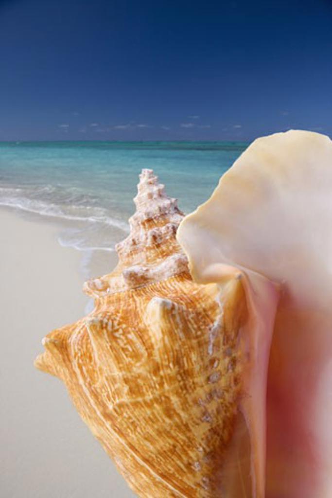 Still life of seashell at beach : Stock Photo