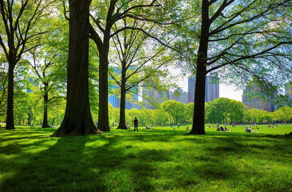 Great lawn in Central Park : Stock Photo