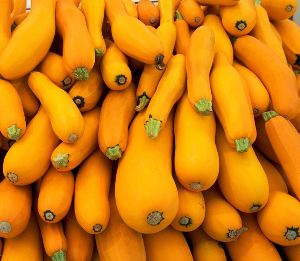Basket of yellow zucchini : Stock Photo
