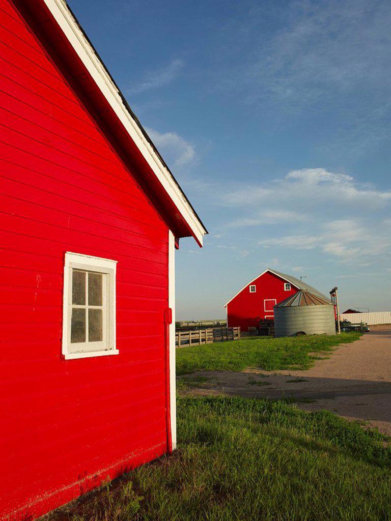 Farm : Stock Photo