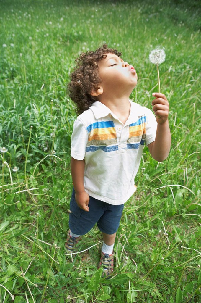 Stock Photo: 1795R-33020 Young child blowing dandelion seed head