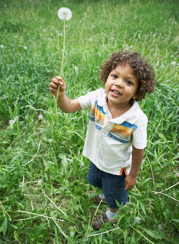 Stock Photo: 1795R-33021 Cute young child holding dandelion