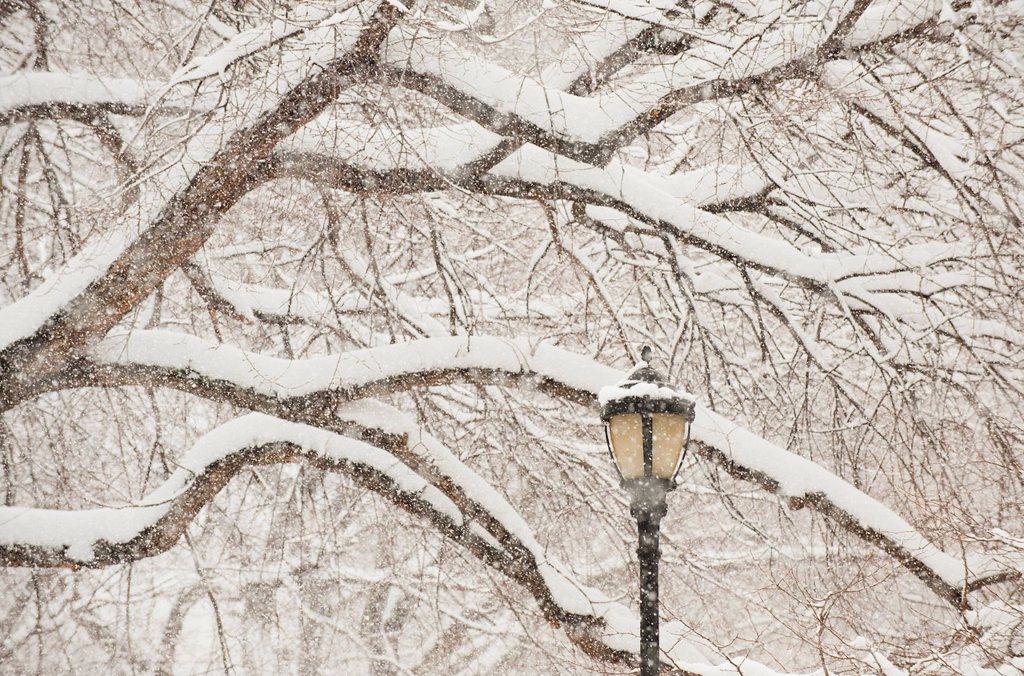 Snow covered tree branches and lamp post : Stock Photo