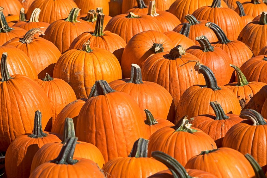 Stock Photo: 1795R-37179 Pumpkins