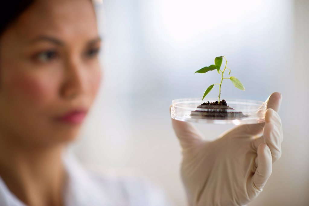 Stock Photo: 1795R-39192 USA, New Jersey, Jersey City, Female scientist holding seedling in petri dish