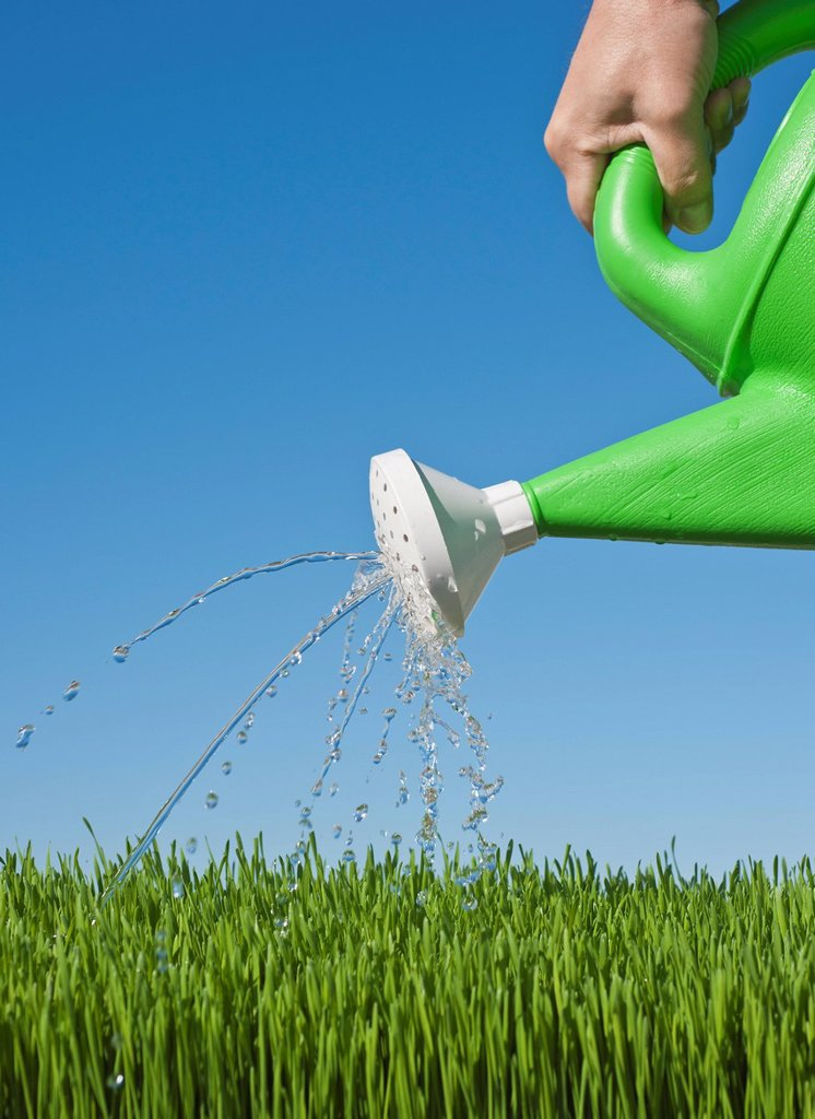Man watering grass using watering can : Stock Photo