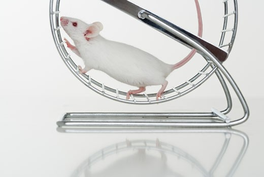 Stock Photo: 1795R-3964 White mouse running on wheel