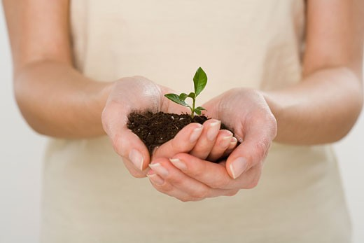 Woman holding seedling : Stock Photo