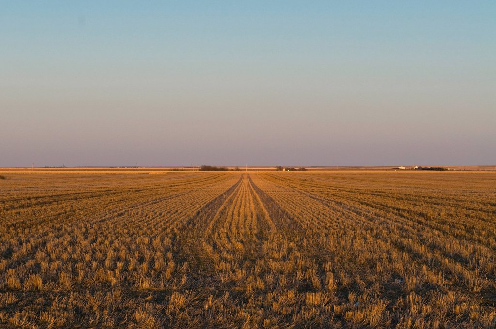 Stock Photo: 1795R-40976 USA, Kansas, field