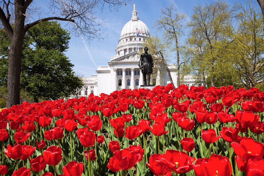 USA, Wisconsin, Madison, State Capitol Building, red tulips in foreground : Stock Photo