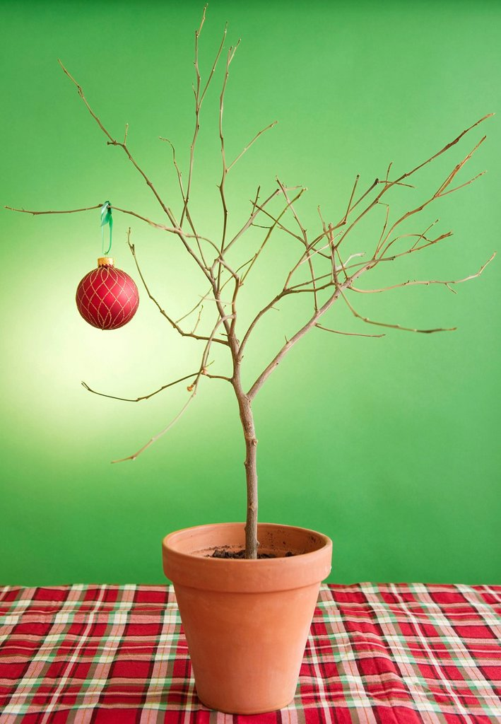 Close up of potted plant with single christmas bauble : Stock Photo