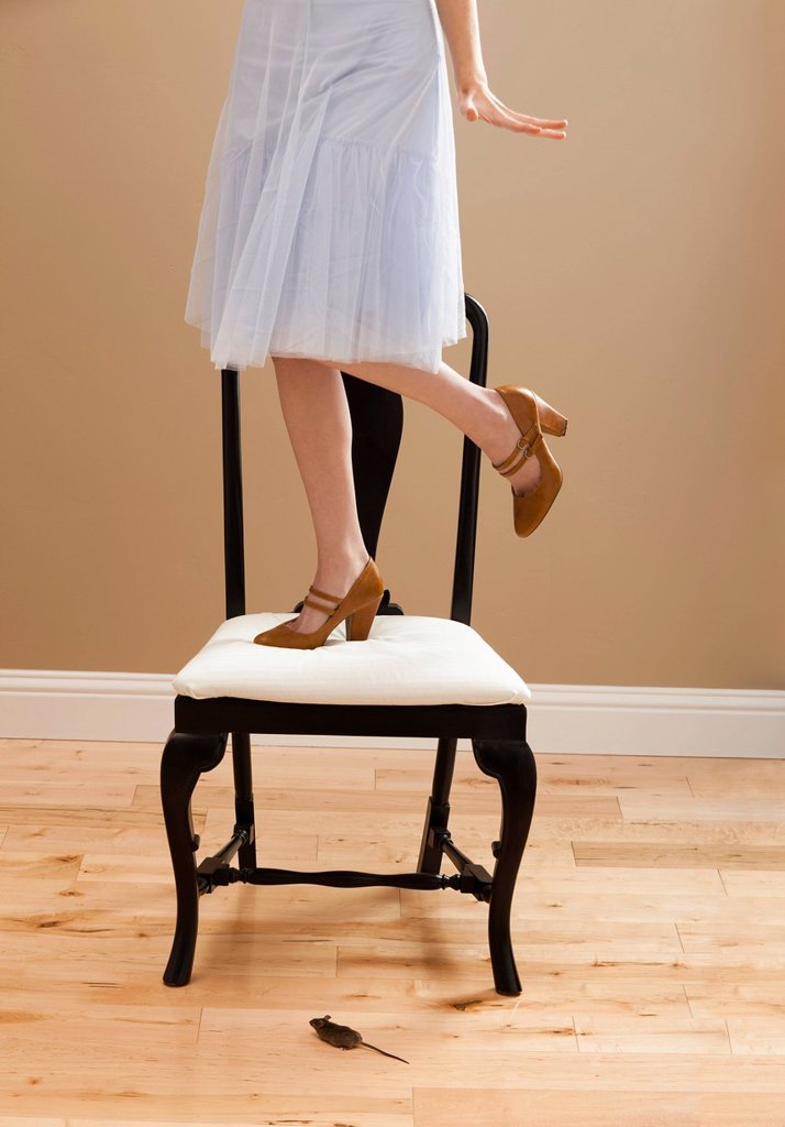 Stock Photo: 1795R-46334 USA, Utah, Lehi, Young woman standing on chair, evading mouse