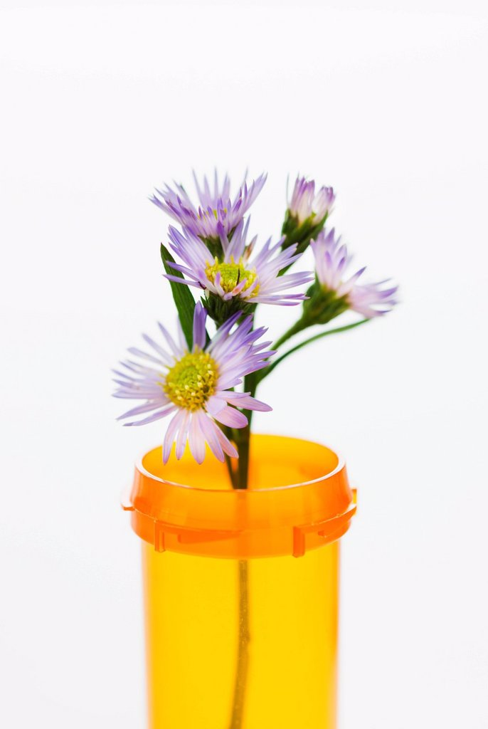 Herbal medicine in pill bottle : Stock Photo