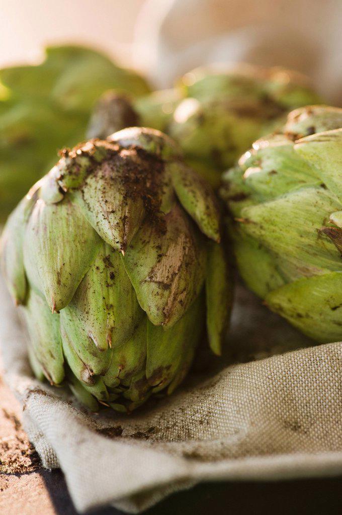 Close up of artichoke : Stock Photo