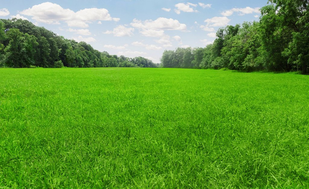 Stock Photo: 1795R-55813 USA, Connecticut, Kent, green meadow