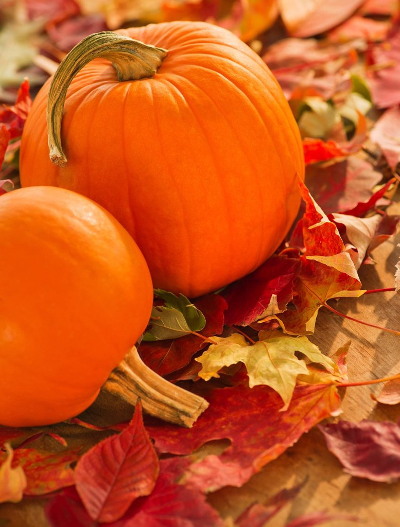 Stock Photo: 1795R-59364 Halloween pumpkins