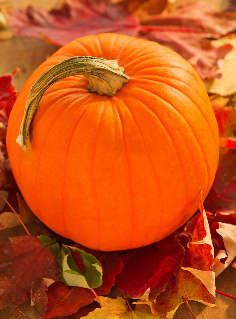 Stock Photo: 1795R-59365 Halloween pumpkin