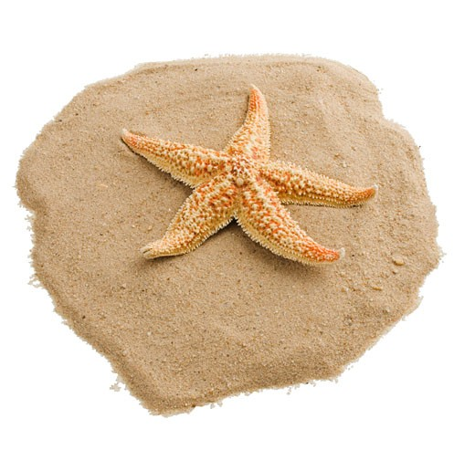 Starfish on sand : Stock Photo
