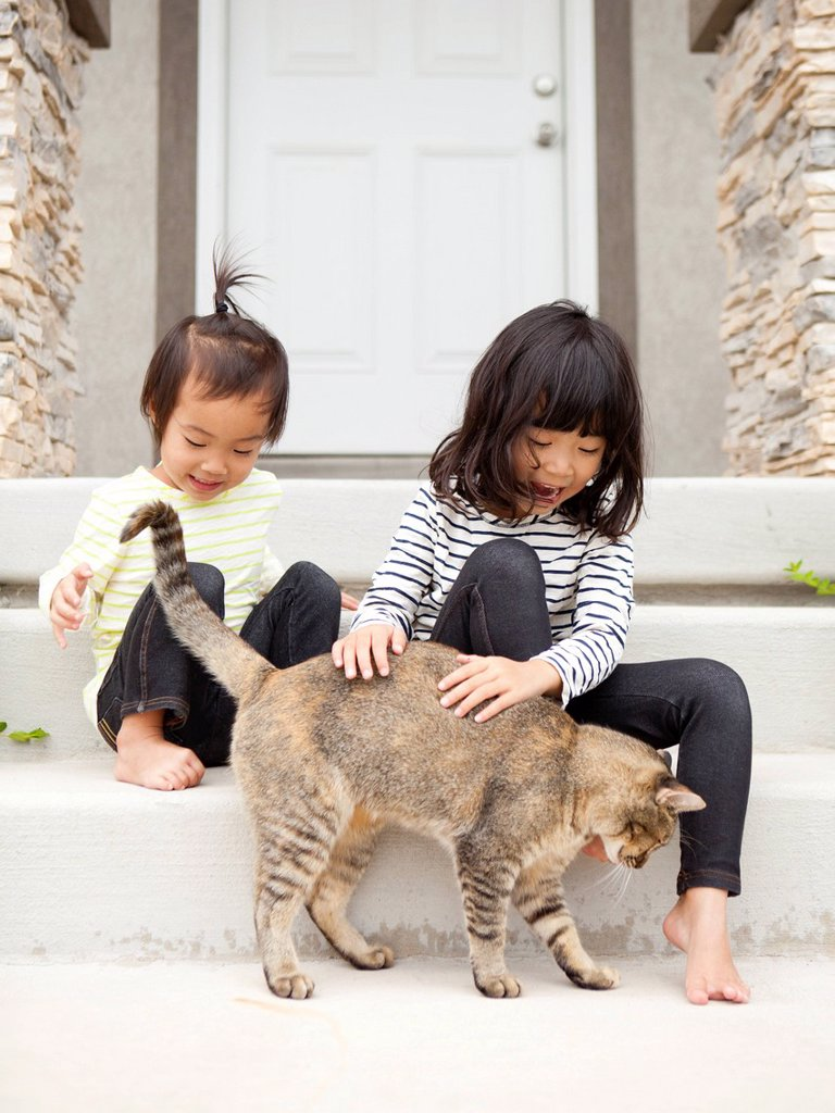 Two sisters 2_3, 4_5 playing with cat : Stock Photo