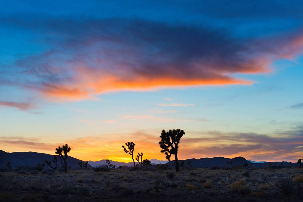 Stock Photo: 1795R-67943 USA, California, Joshua Tree National Park at sunset