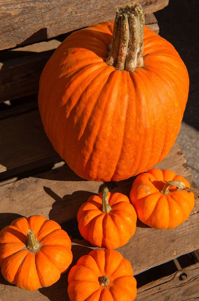 Pumpkins on planks : Stock Photo
