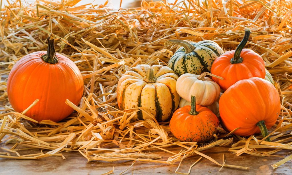 Stock Photo: 1795R-77113 Still life with pumpkins and gourds
