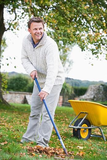 Man outdoors raking leaves near wheelbarrow and smiling (selective focus) : Stock Photo