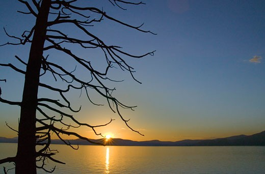 Silhouette of a dead tree at the lakeside at sunset, Lake Tahoe, California, USA : Stock Photo