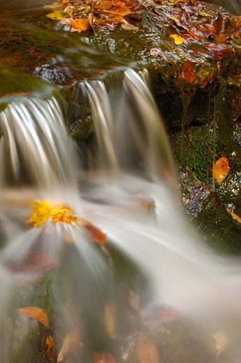 Waterfall in a forest, Potomac State Forest, Western Maryland, Maryland, USA : Stock Photo