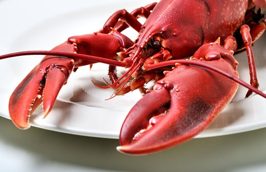 Lobster being prepared for cooking : Stock Photo