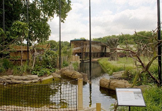 GORILLA KINGDOM, LONDON ZOO, REGENTS PARK, LONDON, NW1 CAMDEN TOWN, UNITED KINGDOM, VIEW FROM AN AVERY, PROCTOR MATTHEWS ARCHITECTS : Stock Photo