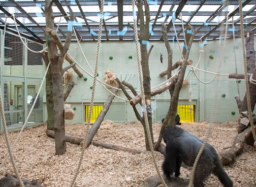 Stock Photo: 1801-21086 GORILLA KINGDOM, LONDON ZOO, REGENTS PARK, LONDON, NW1 CAMDEN TOWN, UNITED KINGDOM, DEATAIL OF INTERNAL GORILLA ENCLOSURE, PROCTOR MATTHEWS ARCHITECTS