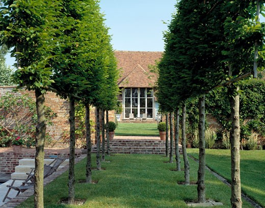 COURT BARN, KENT, UNITED KINGDOM, TREES TO BUILDING AND WINDOW, CARRICK HOWELL AND LAWRENCE (RESTORATION) / BERE ARCHITECTS (LANDSCAPING AND POOL) : Stock Photo