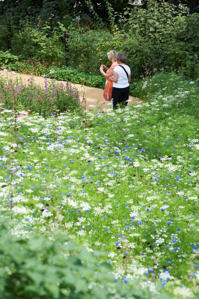 Stock Photo: 1801-73789 London 2012 Olympic Park, Sports Centre, Europe, United Kingdom,2012, Various. Wild flowers.