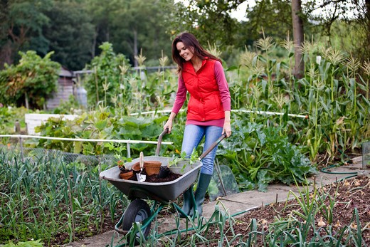 A young woman pushing a wheelbarrow containing compost and strawberry plants : Stock Photo