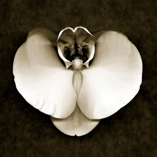Stock Photo: 1805-164 Orchid by John Kuss
