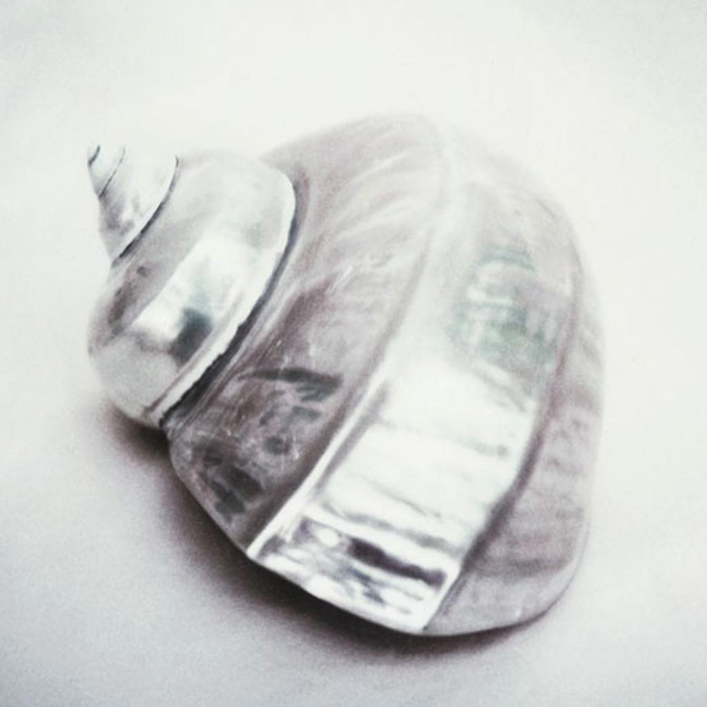 Stock Photo: 1805-215 Pink shell silver by John Kuss, Photograph