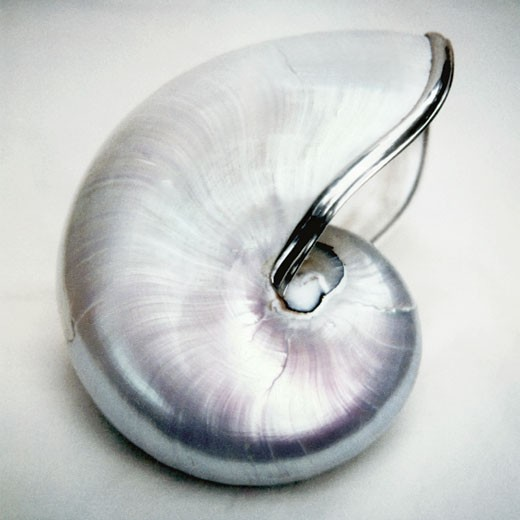 Stock Photo: 1805-220 Silver nautilus by John Kuss, Photograph