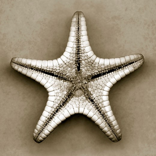 Stock Photo: 1805-221 Starfish by John Kuss, Photograph