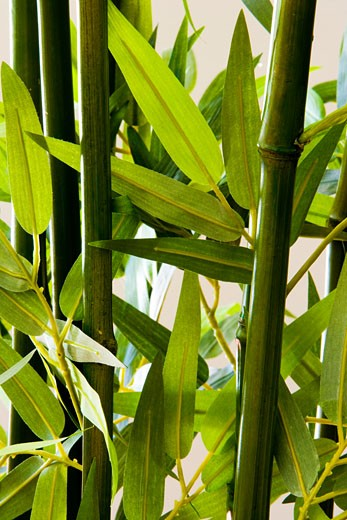 Detail of bamboo stalks : Stock Photo