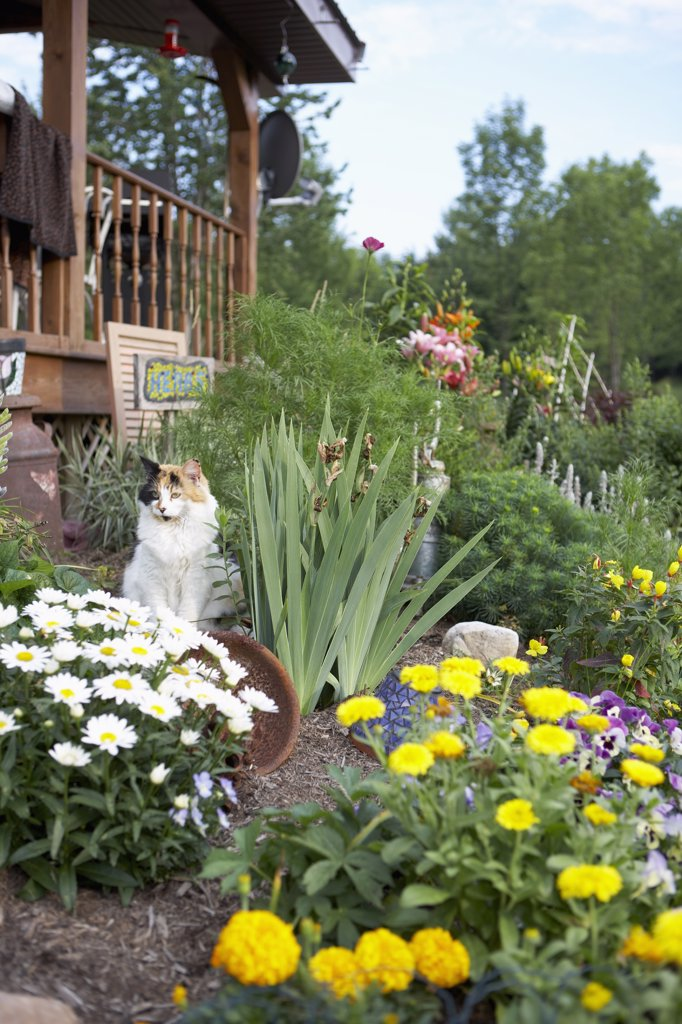 Stock Photo: 1806R-8203 cat relaxes in country garden