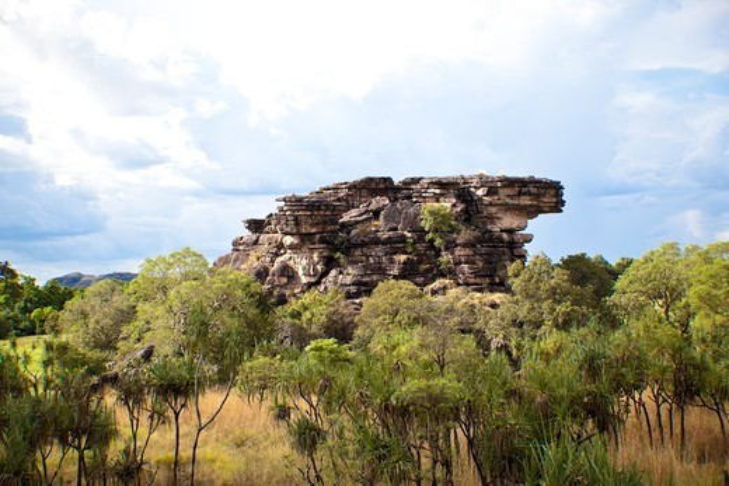 Trees on a hill, Kakadu National Park, Northern Territory, Australia : Stock Photo