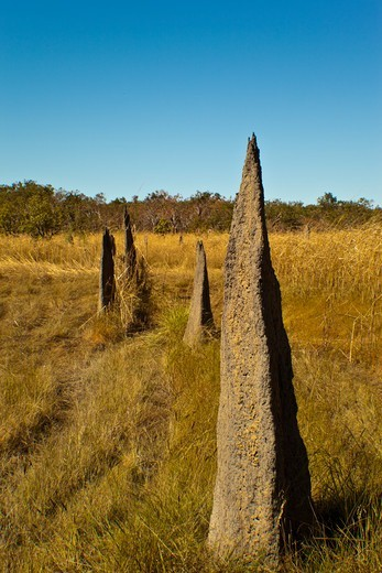 Stock Photo: 1807-420 Australia, Northern Territory, Kakadu National Park, Magnetic termite mounds
