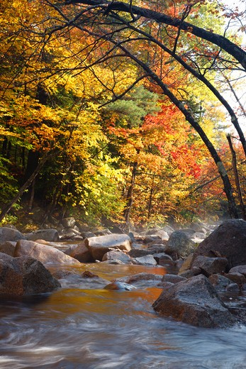 Stock Photo: 1809-10875 Swift River during the autumn months near the Kancamagus Highway (route 112) which is one of New England's scenic byways. Located in the White Mountains, New Hampshire USA