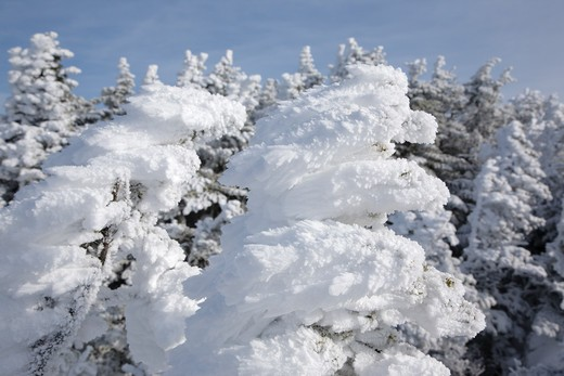 Stock Photo: 1809-11974 Appalachian Trail - Rime Ice along the Crawford Path in the White Mountains, New Hampshire USA