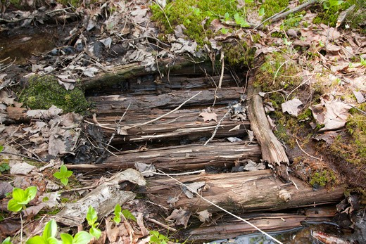 Stock Photo: 1809-12469 Pemigewasset Wilderness - Remnants of old sled road off of the old East Branch & Lincoln Railroad in the Cedar Brook Valley in Lincoln, New Hampshire USA. Established during the Parker-Young Company logging era
