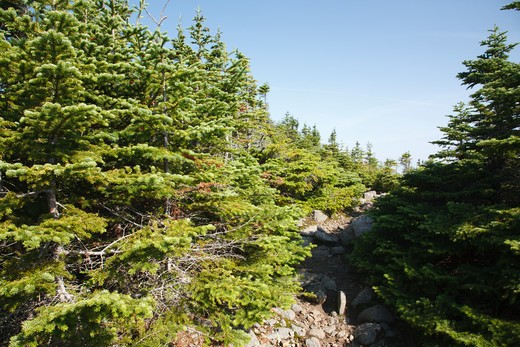 Signal Ridge Trail during the summer months. Located in the White Mountains, New Hampshire USA. : Stock Photo