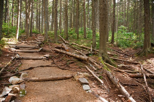 Zealand Trail during the summer months. Located  in the White Mountains, New Hampshire USA : Stock Photo