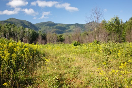 Regrowth (foreground) of forest three months (+/-) after a controlled burn along the Kancamagus Highway in the White Mountains, New Hampshire USA. : Stock Photo